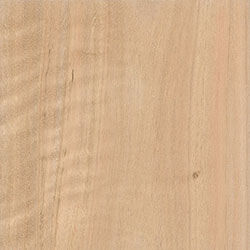 Spotted Gum (VIC & NSW)