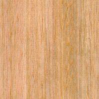 Tasmanian-Oak